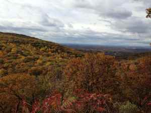 Black Rock Forest, Fall 2013